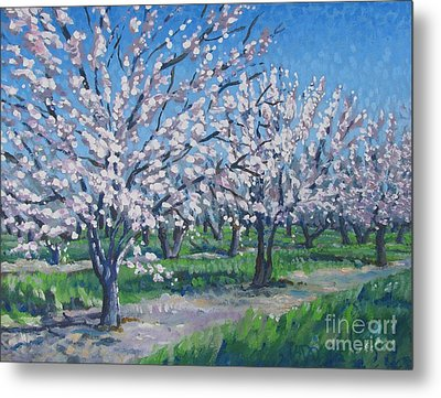 California Orchard Metal Print by Vanessa Hadady BFA MA