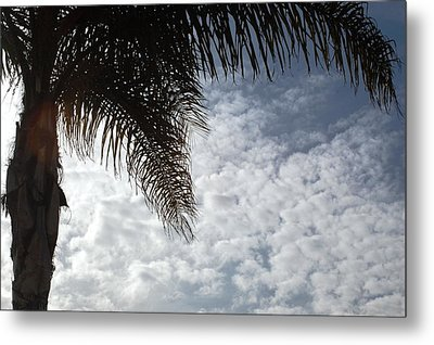 California Palm Tree Half View Metal Print