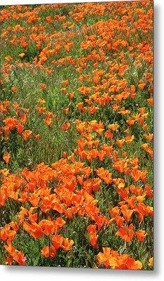 California Poppies- Art By Linda Woods Metal Print by Linda Woods