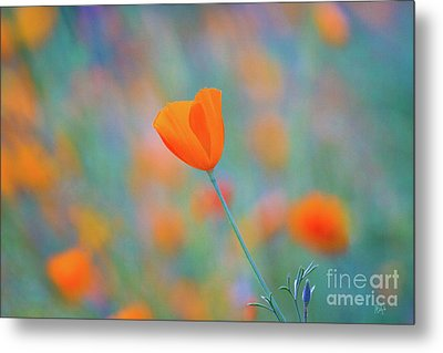 Spring Poppy Metal Print by Anthony Bonafede