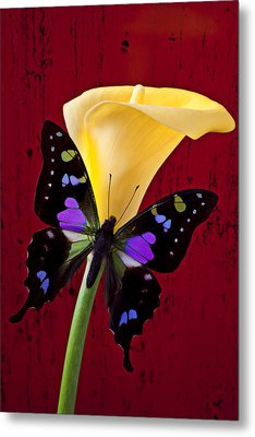 Calla Lily And Purple Black Butterfly Metal Print by Garry Gay