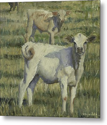 Calves In The Pasture Metal Print by John Reynolds