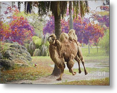 Camel On The Move Metal Print