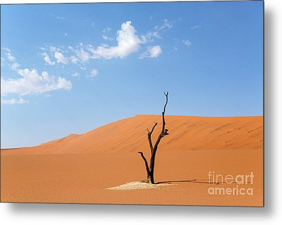 Camelthorn Tree In Sossusvlei, Namibia Metal Print by Julia Hiebaum