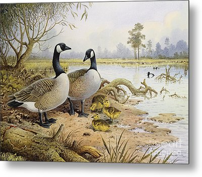 Canada Geese Metal Print by Carl Donner