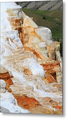 Canary Spring Mammoth Hot Springs Upper Terraces Metal Print by Louise Heusinkveld