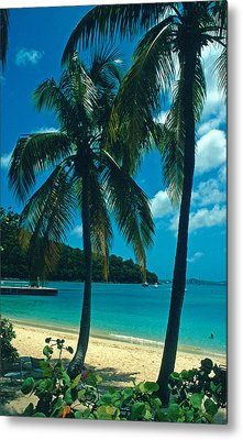 Caneel Bay Palms Metal Print by Kathy Yates
