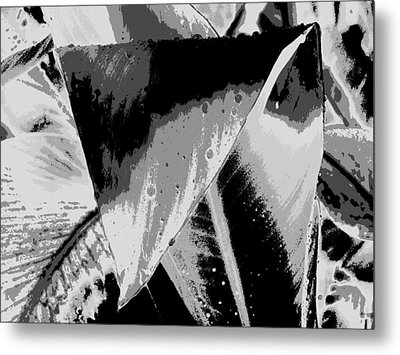 Canna In Shades Of Grey Metal Print by Beth Akerman