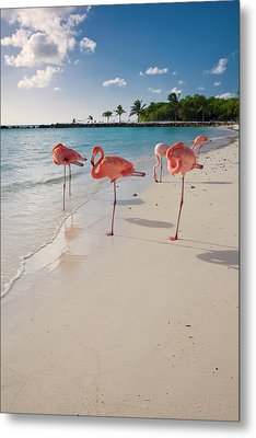 Caribbean Beach With Pink Flamingos Metal Print by George Oze