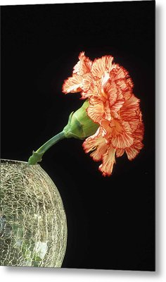 Carnation Metal Print by Laurie Paci