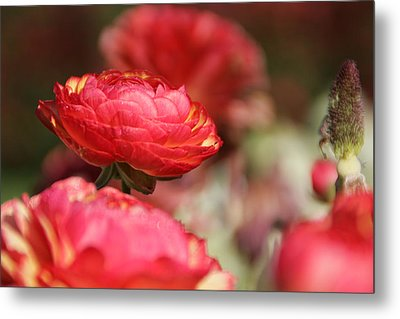 Carnival Of Flowers 06 Metal Print by Andrea Jean