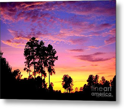 Carolina Pine Sunset Metal Print by Patricia L Davidson