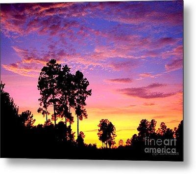 Carolina Pine Sunset Metal Print