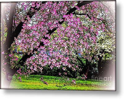 Cascading Dogwood Copyright Mary Lee Parker 17, Metal Print