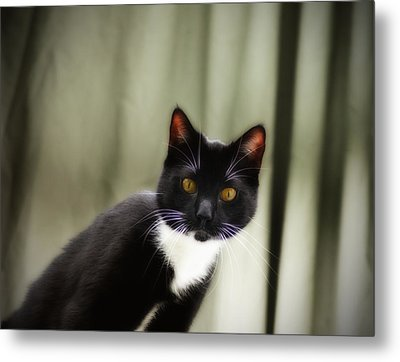 Cat Cat Metal Print by Bill Cannon