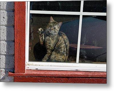 Cat In The Red  Window Metal Print
