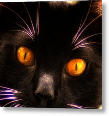 Cats Eyes Metal Print by Bill Cannon