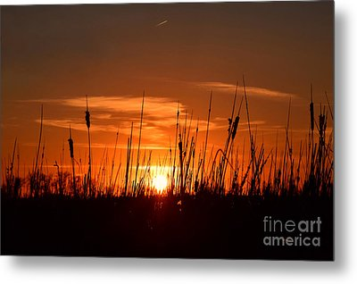 Cattails And Twilight Metal Print