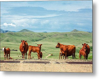 Cattle Guards Metal Print by Todd Klassy