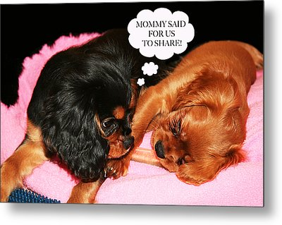 Cavalier King Charles Spaniel Let's Share Metal Print by Daphne Sampson