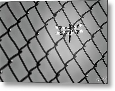 Chainlink Dragon Fly Metal Print