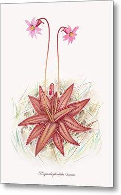 Chapman's Butterwort Metal Print by Scott Bennett