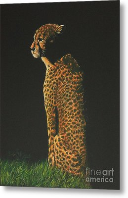 Cheetah At Sunset Metal Print