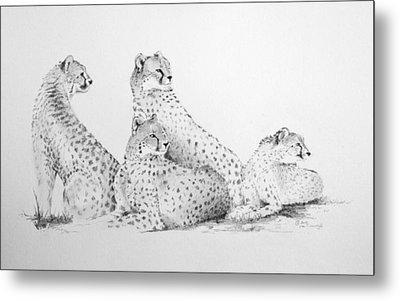 Cheetah Group Metal Print by Alan Pickersgill