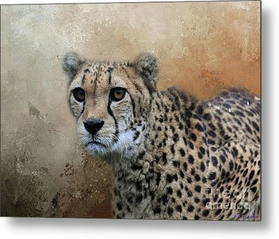 Cheetah Portrait Metal Print by Eva Lechner