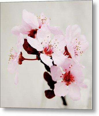 Cherry Blossoms 1- Art By Linda Woods Metal Print