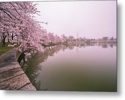 Cherry Blossoms In Fog Metal Print