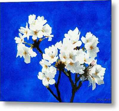 Cherry Blossoms Metal Print by William  Nelson