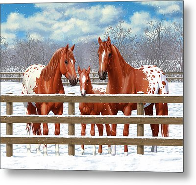 Chestnut Appaloosa Horses In Snow Metal Print by Crista Forest