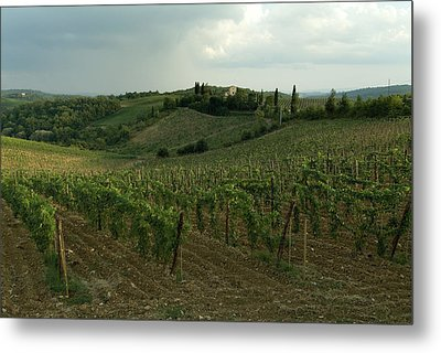Chianti Vineyards In Tuscany Metal Print by Todd Gipstein