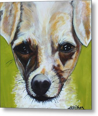 Metal Print featuring the painting Chihuahua Mix- Roxie by Laura  Grisham