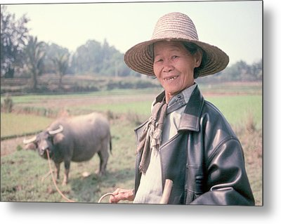 Metal Print featuring the photograph Chinese Farm Woman Oxen by Douglas Pike