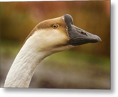 Chinese Goose Metal Print by Jean Noren