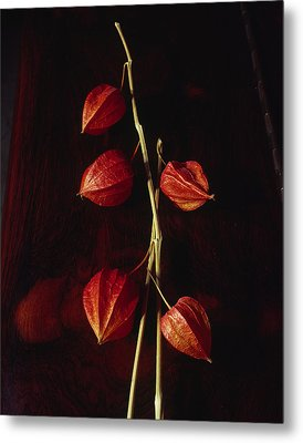 Chinese Lanterns Metal Print by Art Ferrier