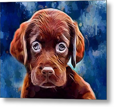 Chocolate Lab Pup Metal Print by Scott Wallace