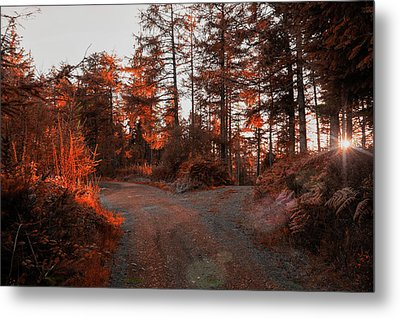 Choose The Road Less Travelled Metal Print