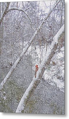 Christmas Card - Cardinal In Tree Metal Print by Larry Bishop