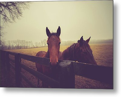 Metal Print featuring the photograph Christmas Horses by Shane Holsclaw
