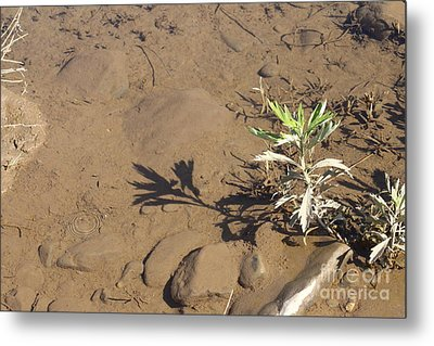 Metal Print featuring the photograph Circle Shadow Plant by Marie Neder