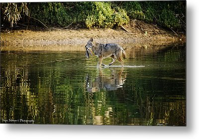 Ckal Found Lunch Metal Print by Isaac Silman