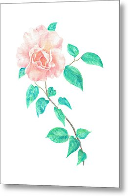 Metal Print featuring the painting Climbing Rose by Elizabeth Lock