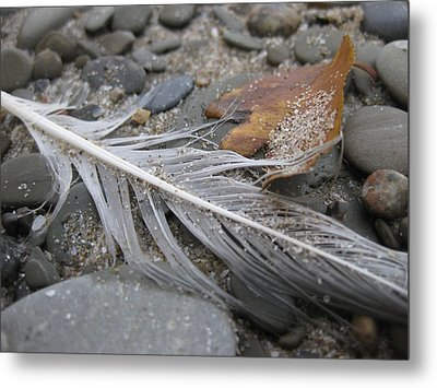 Close Up Nature 1 Metal Print