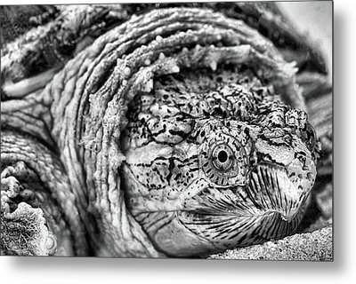 Closeup Of A Snapping Turtle Metal Print
