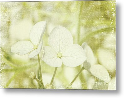 Closeup Of Hydrangea Flowers With Vintage Background Metal Print by Sandra Cunningham