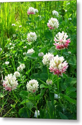 Clover Field Metal Print by Anna Villarreal Garbis