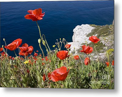 Coastal Poppies Metal Print